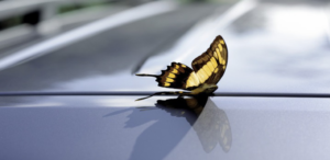 SCP Car Professional Angebot Fit in den Sommr